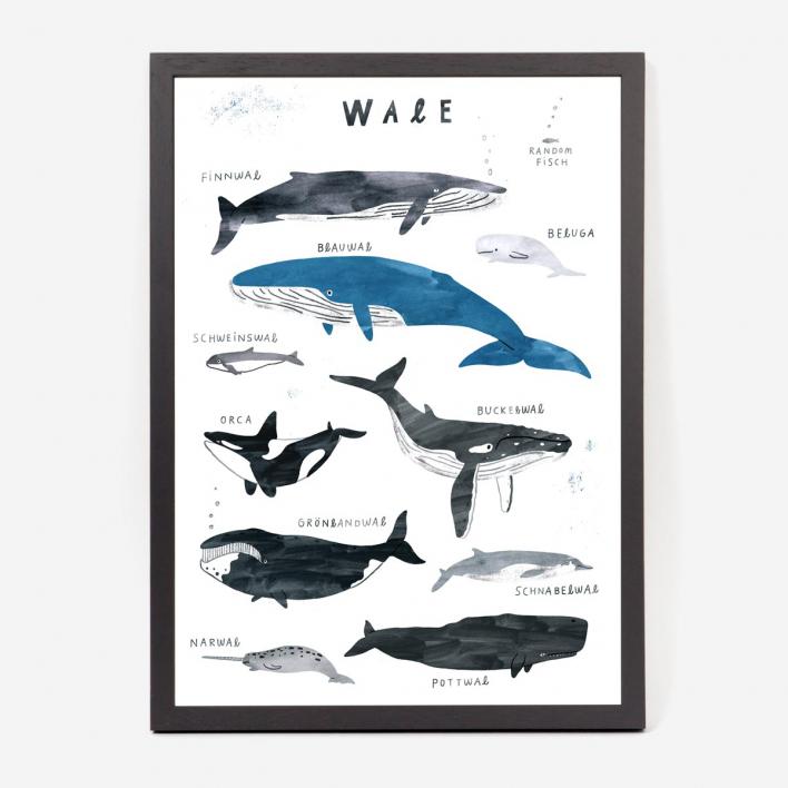 Studio Nepumuk Wale Kunstdruck / Giclée-Print Rahmen Schwarz